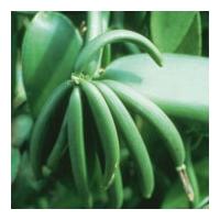 Bio vanília kivonat